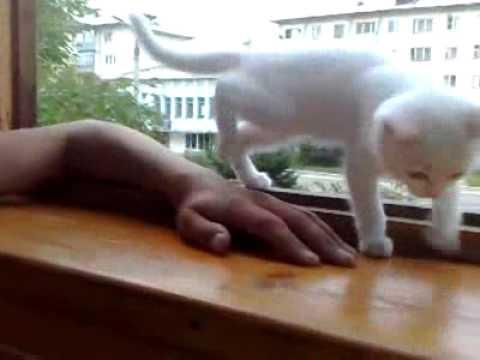 Dieses Kätzchen hat solche Angst, dass Herrchens Hand aus dem Fenster fällt. Das ist so süß.
