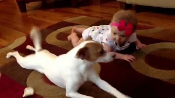 Das ist zuckersüß. Ein kleiner Hund zeigt dem Baby, wie es robben soll.