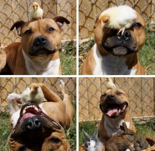 Süsser Hund mit seinen Kumpels