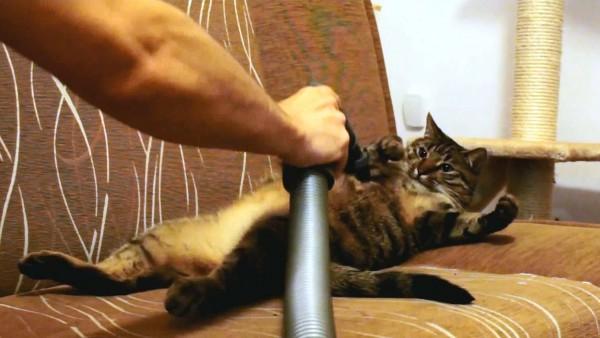 Sie haben den Staubsauger zweckentfremdet, aber diese Methode ist ein einziger Katzentraum.