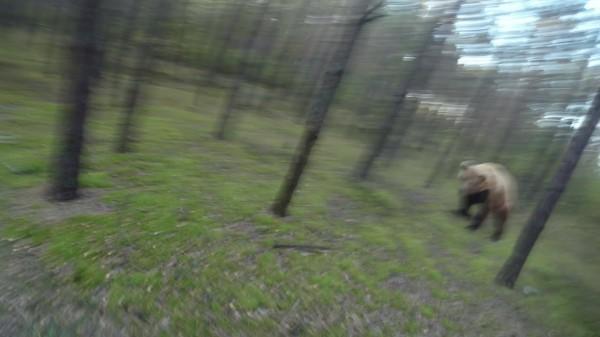 Dieser Mann radelt durch den Wald, da kommen 200kg Braunbär auf ihn zugerannt. Unglaublich!