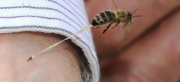 méhecskeKEZDŐ