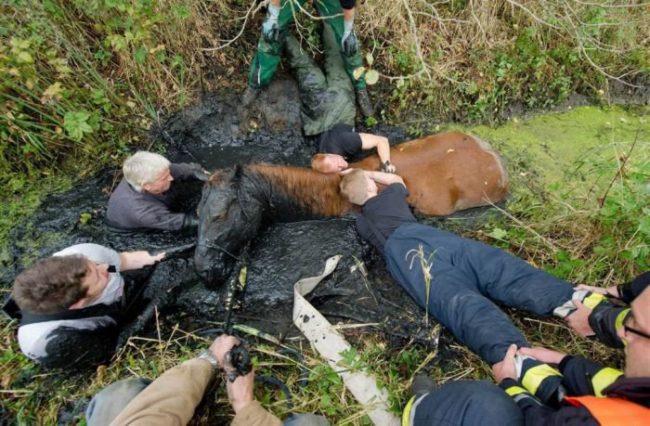 Pferde Rettung