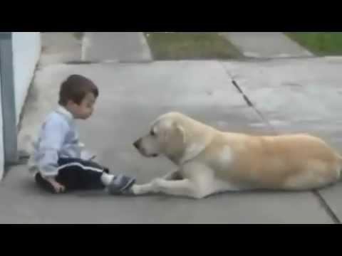 Ein gelber Labrador begegnet zum ersten Mal einem Jungen mit Down-Syndrom. Wie er reagiert, macht mich sprachlos.