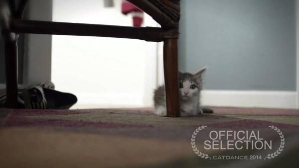 Ein kleines Kind dreht einen Film über ihre neue Babykatze. Zuhause wartet aber noch jemand. Gefühl pur!