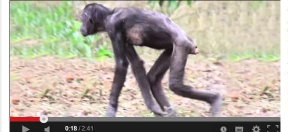 majomKEZDŐ