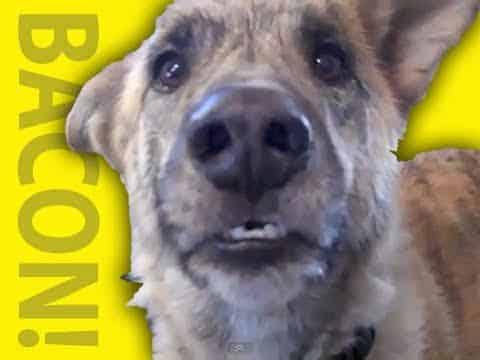 Für diesen Hund bricht nach 60 Sekunden eine Welt zusammen und ich breche vor Lachen zusammen!