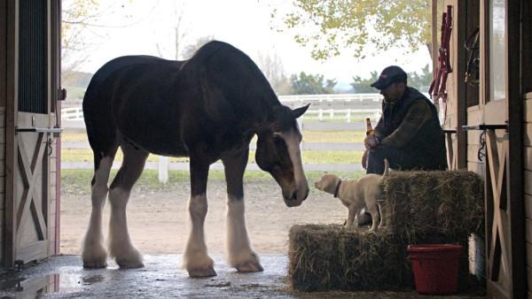 Dieser kleine Hund wird beinahe von Wölfen zerfleischt. Aber wer ihm zuhilfe kommt, glaubst du kaum.