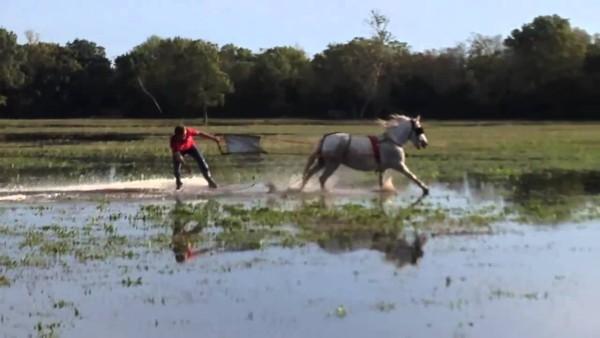 Was kannst du tun, wenn es regnet  zu viel? Nimm  ein Pferd und  surf.  Sieh das Video um zu wissen, wie und was sollst du machen.