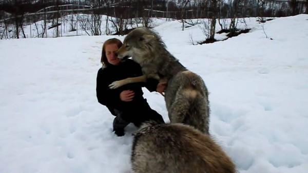 Eine junge Frau sitzt im Wald im Schnee, als plötzlich eine Rudel Wölfe über sie herfällt.