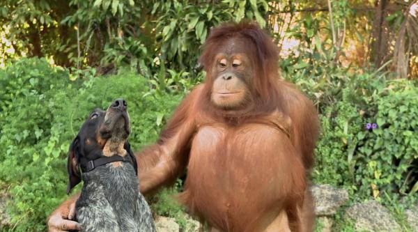 Diese unterschiedlichen Tiere teilen Freundschaften, die dein Herz zum Zerplatzen bringen werden.