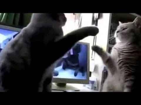 Egal, was sie tun, man nimmt es mit Kusshand. Schließlich sind es Katzen!