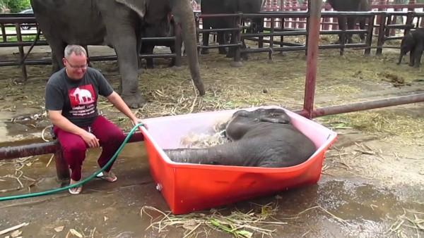 Dieses Mädchen versucht, einem Elefanten beim Duschen zu helfen, doch stattdessen tut er dann dies.