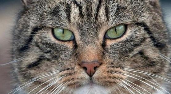 17 éves cica