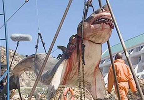 15-TON_PREHISTORIC_SHARK_CAPTURED_OFF_COAST_OF_PAKISTAN