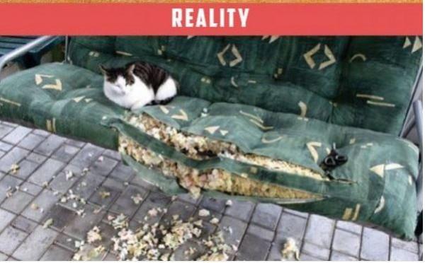 macska