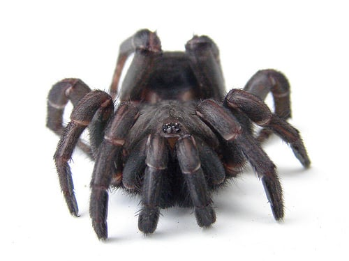 15_Reasons_Arachnophobes_Should_Skip_a_Trip_to_Australia4