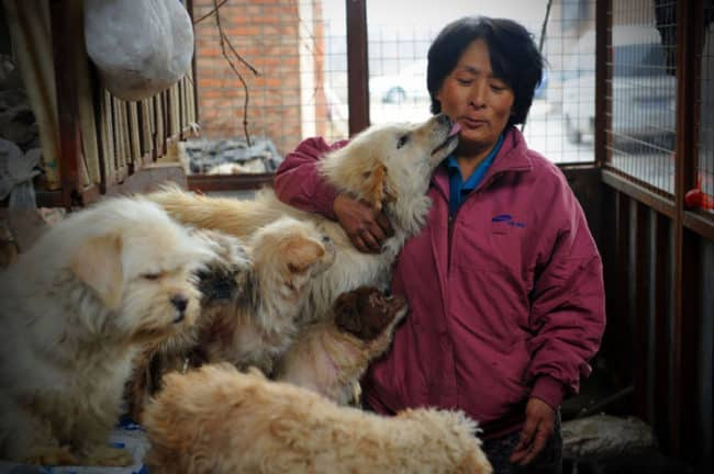 Chinese_Woman_Travels_1500_Miles_And_Pays_1100_To_Save_100_Dogs_From_Chinese_Dog-Eating_Festival