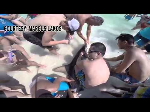 Da liegt ein Hammerhai am Strand! Diese zwei Brüder zeigen keine Angst vor dem Tier und retten ihm das Leben.