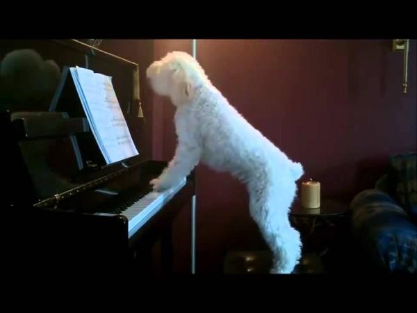 Als dieser Hund merkt, dass niemand mehr da ist, setzt er sich traurig ans Klavier und macht DAS.