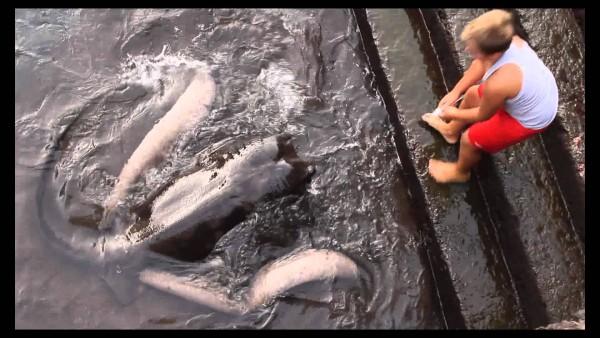 Dieser Junge hat sich mit einem ganz besonderen Tier angefreundet. Wow, ich hätte nie gedacht, dass das möglich ist!