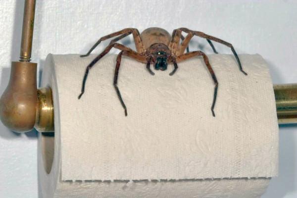 15_Reasons_Arachnophobes_Should_Skip_a_Trip_to_Australia