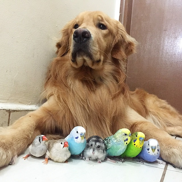 A_Dog_8_Birds_And_A_Hamster_Are_The_Most_Unusual_Best_Friends_Ever1