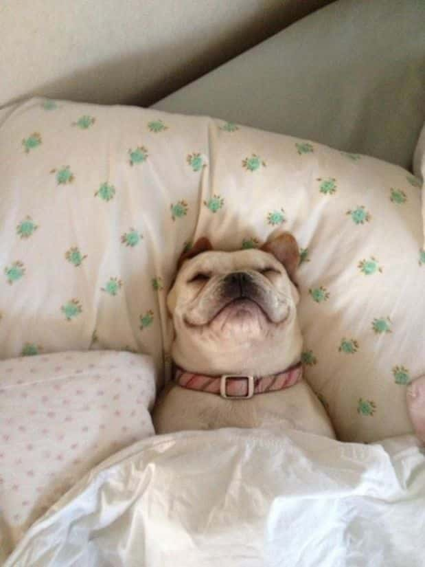 Adorable_Sleepy_Dogs_Who_Are_Ready_for_Bed_Right_Now2