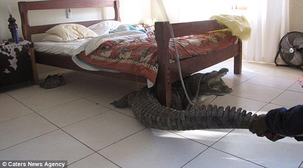 10_Strangest_Things_Found_Under_Beds