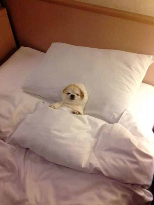 Adorable_Sleepy_Dogs_Who_Are_Ready_for_Bed_Right_Now3