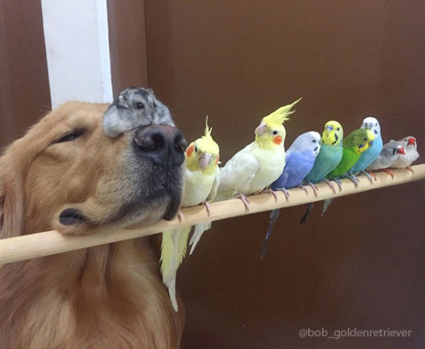 A_Dog_8_Birds_And_A_Hamster_Are_The_Most_Unusual_Best_Friends_Ever