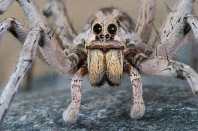 15_Reasons_Arachnophobes_Should_Skip_a_Trip_to_Australia2