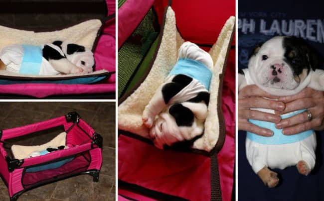 Half_A_Dog_Twice_The_Love_Rescued_Puppy_Born_With_2_Legs_Needs_Your_Help2