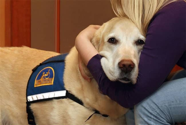 It's_Scary_To_Testify_In_Front_Of_Your_Attacker_In_Court_But_These_Dogs_Make_It_Easier2