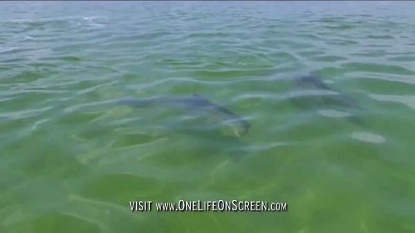 Was dieser Delfin in Sekundenschnelle tut, wird dich mit offenem Mund staunen lassen.