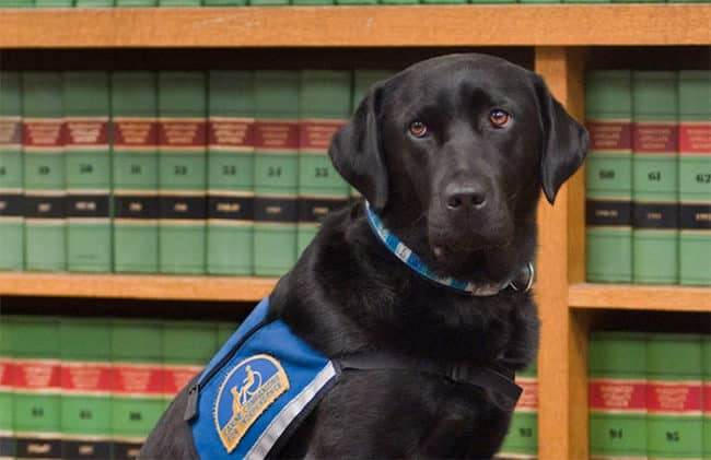 It's_Scary_To_Testify_In_Front_Of_Your_Attacker_In_Court_But_These_Dogs_Make_It_Easier6