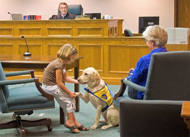 It's_Scary_To_Testify_In_Front_Of_Your_Attacker_In_Court_But_These_Dogs_Make_It_Easier5