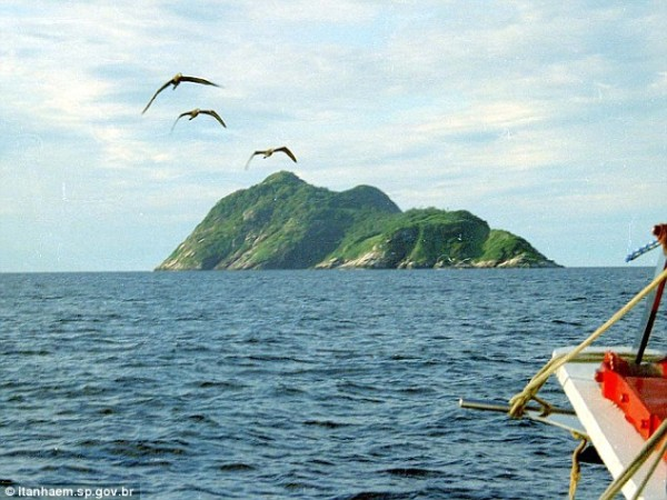 Beware_snake_island_Forbidden_rock_off_the_coast_of_Brazil_is_home_to_world's_deadliest_serpent_-_and_its_venom_MELTS_human_flesh