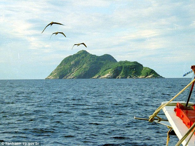 Beware_snake_island_Forbidden_rock_off_the_coast_of_Brazil_is_home_to_world's_deadliest_serpent_-_and_its_venom_MELTS_human_flesh