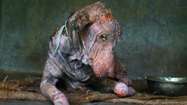 Was ist das für ein Tier? Doch erst 62 Tage später erkennen Tierschützer die Wahrheit.
