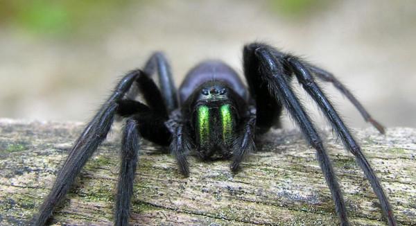 Spider_cutted