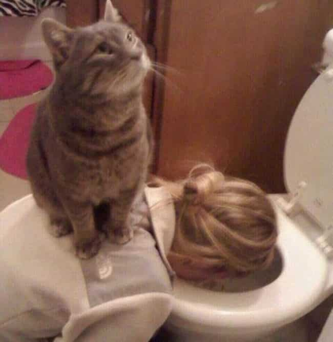 20_Pictures_Proving_That_Cats_Are_Jerks6