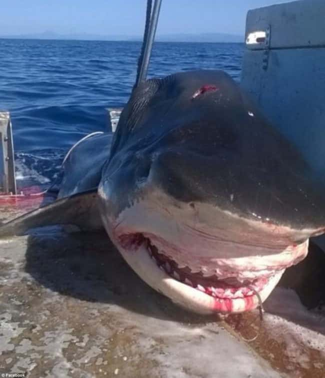 2B4A1A8900000578-3194557-_As_far_as_I_m_aware_It_was_a_kill_order_on_a_shark_here_on_the_-a-3_1439348428947