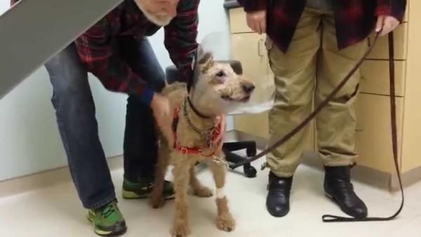 Dieser Hund war Blind und hat seine Familie lange nicht mehr gesehen doch nach einer Operation, kann er seine Familie sehen…