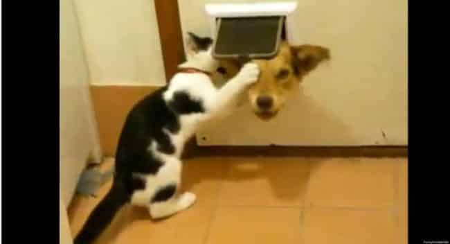 20_Pictures_Proving_That_Cats_Are_Jerks
