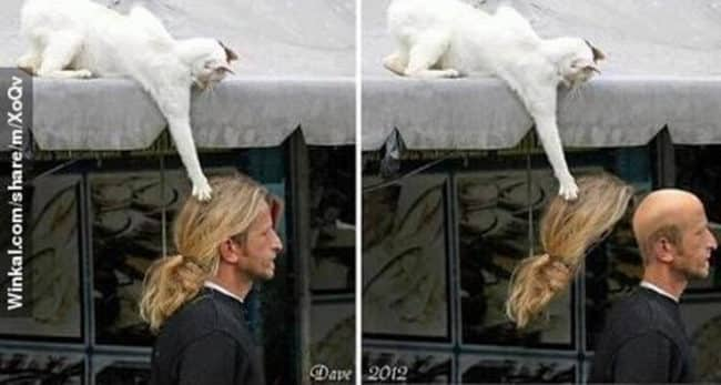 20_Pictures_Proving_That_Cats_Are_Jerks19