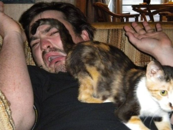 20_Pictures_Proving_That_Cats_Are_Jerks5