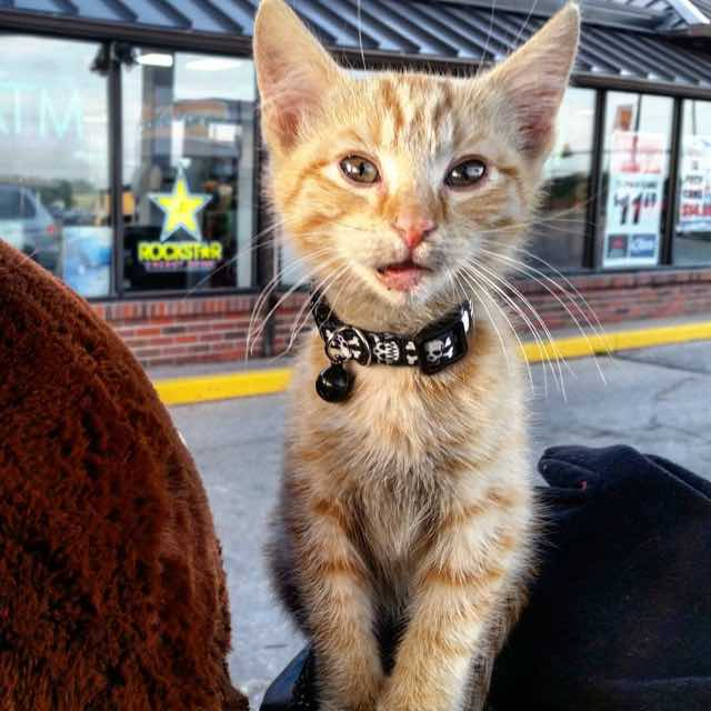 Biker_Saves_Badly_Burned_Kitten_Continues_Cross-Country_Trip_With_Him1