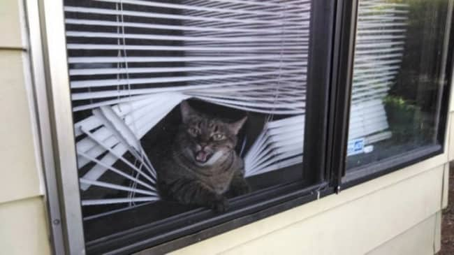 20_Pictures_Proving_That_Cats_Are_Jerks17