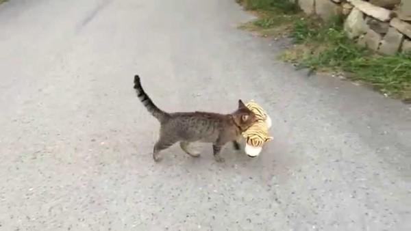 Diesem Nachbarn wird ein Tiger geklaut. Was der Täter damit vorhat? Nach 30 Sekunden ist alles klar.